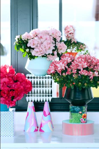 azalea-woonplant-december-2016-roze-bloemen