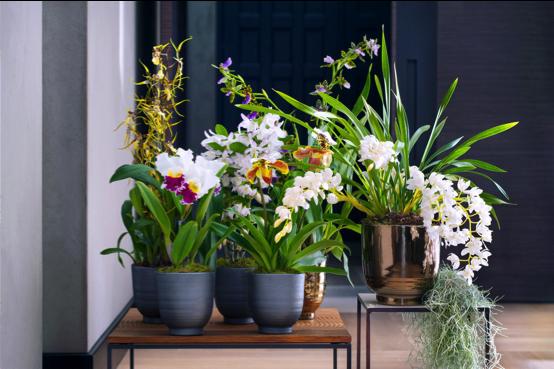 Allerlei verschillende orchideeën