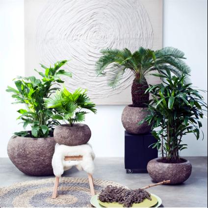 Exclusieve palmen woonplant februari 2017 bij elkaar