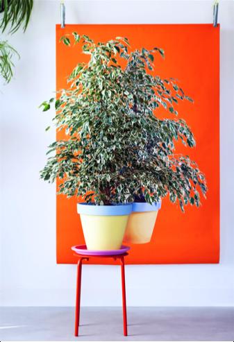 ficus-benjamina-woonplant-januari-2017-oranje-vlak