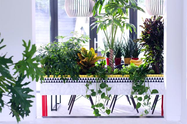 Mannenplanten als woonplant van de maand