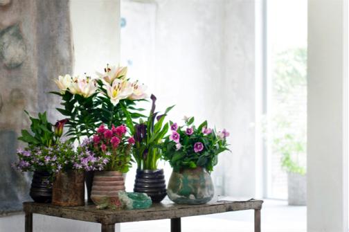 binnenstebuiten plant woonplant mei 2017 op tafel