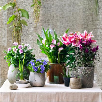 binnenstebuiten plant woonplant mei 2017 vierkant