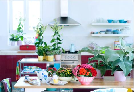 Kalanchoë woonplant juli 2017 keuken