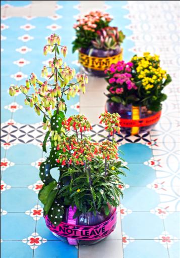 Kalanchoë woonplant juli 2017 tafel