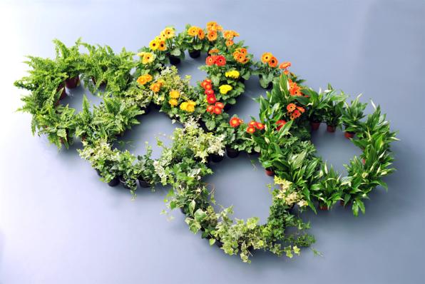 Zuiver groen woonplant oktober 2017 ringen