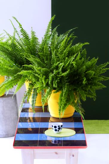 Zuiver groen woonplant oktober 2017 varens
