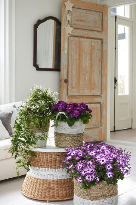 Winterbloeiers woonplant februari 2018 oude deur