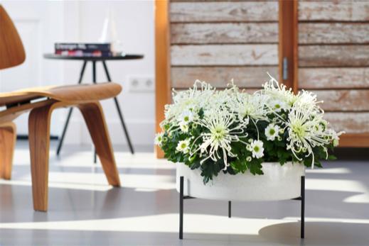 Witte bloemen in een verhoogde pot