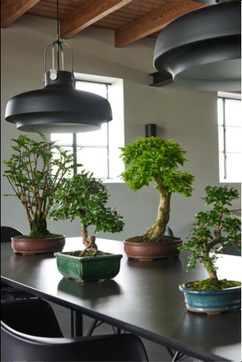 Zenplanten woonplant mei 2018 tafel