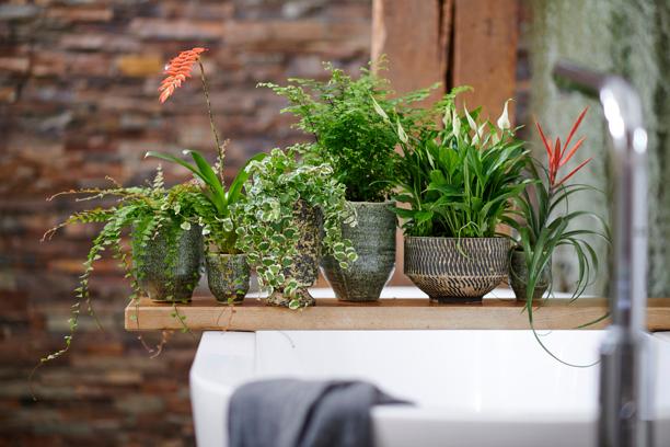Verschillende badkamerplanten bij elkaar