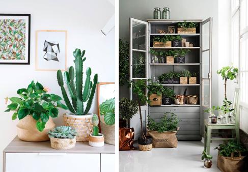 Haal eens wat meer groen in huis!