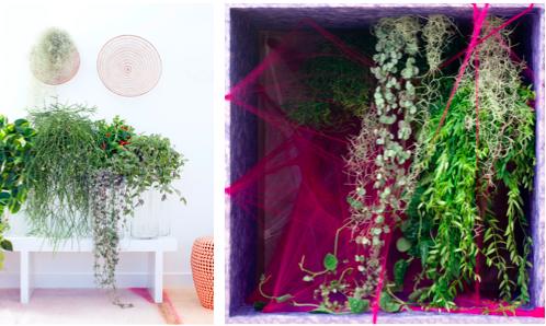 Woonplant van de maand september: hangplanten