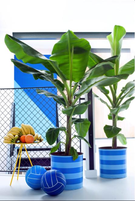 Bananenplant woonplant april 2017 blauwe pot