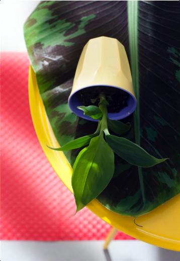 Bananenplant woonplant april 2017 close-up