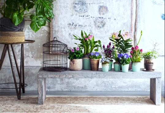 Woonplant van de maand mei: binnenstebuiten-planten