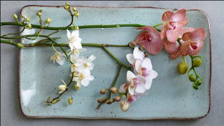 Woonplant van de maand September: vlinderorchidee